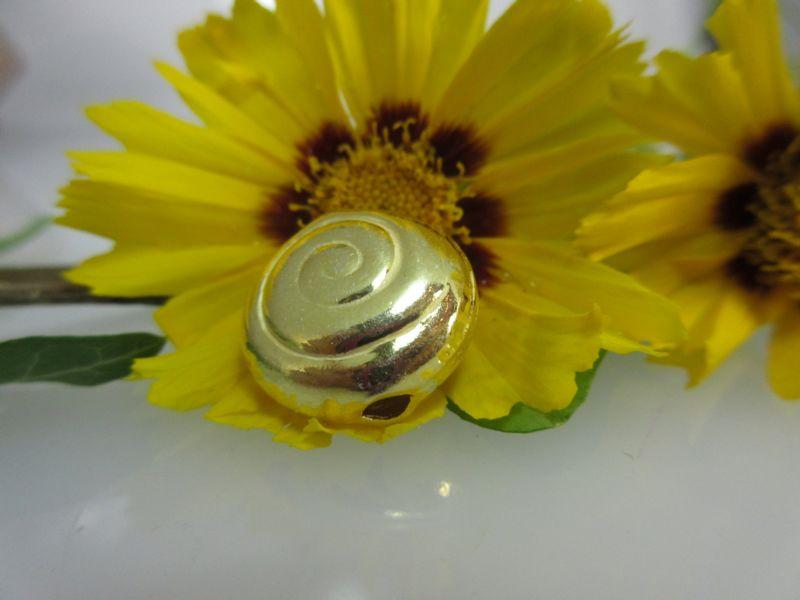 Schnecke vergoldet