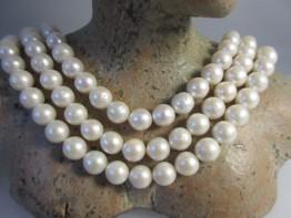 Zuchtperlen mit Kern (Nucleus) / Neu: Runde weiße Perlen