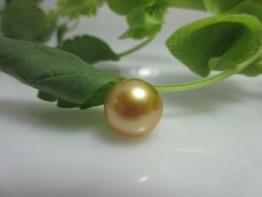 Goldene Südseeperle,ungebohrt,1a Farbe, 11,6mm,ganz rund, Nr.3 S