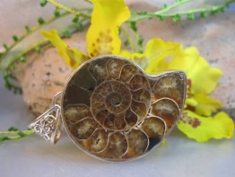 Versteinerte Muschel in echt Silber/ Anhänger Ammonit