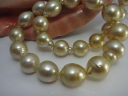 Naturgoldene Perlen / echte goldene Südseeperlen 12-16mm