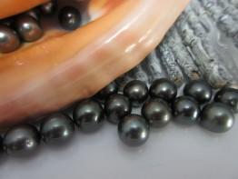 Perlen rund Tahitiperlen 11mm ohne Bohrung 49.- Euro