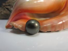 Tahitiperle schwarz,einzelne Perle gigantische 15,6mm Nr.3